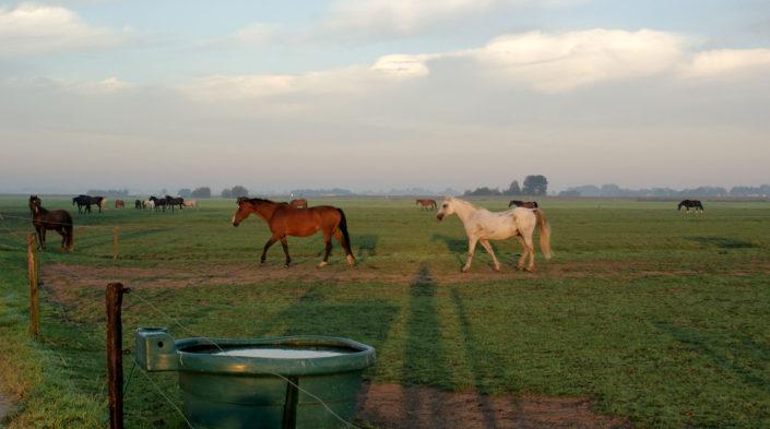Groep paarden in weide