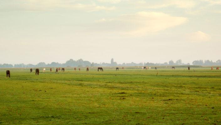 Paarden met pensioen in weide